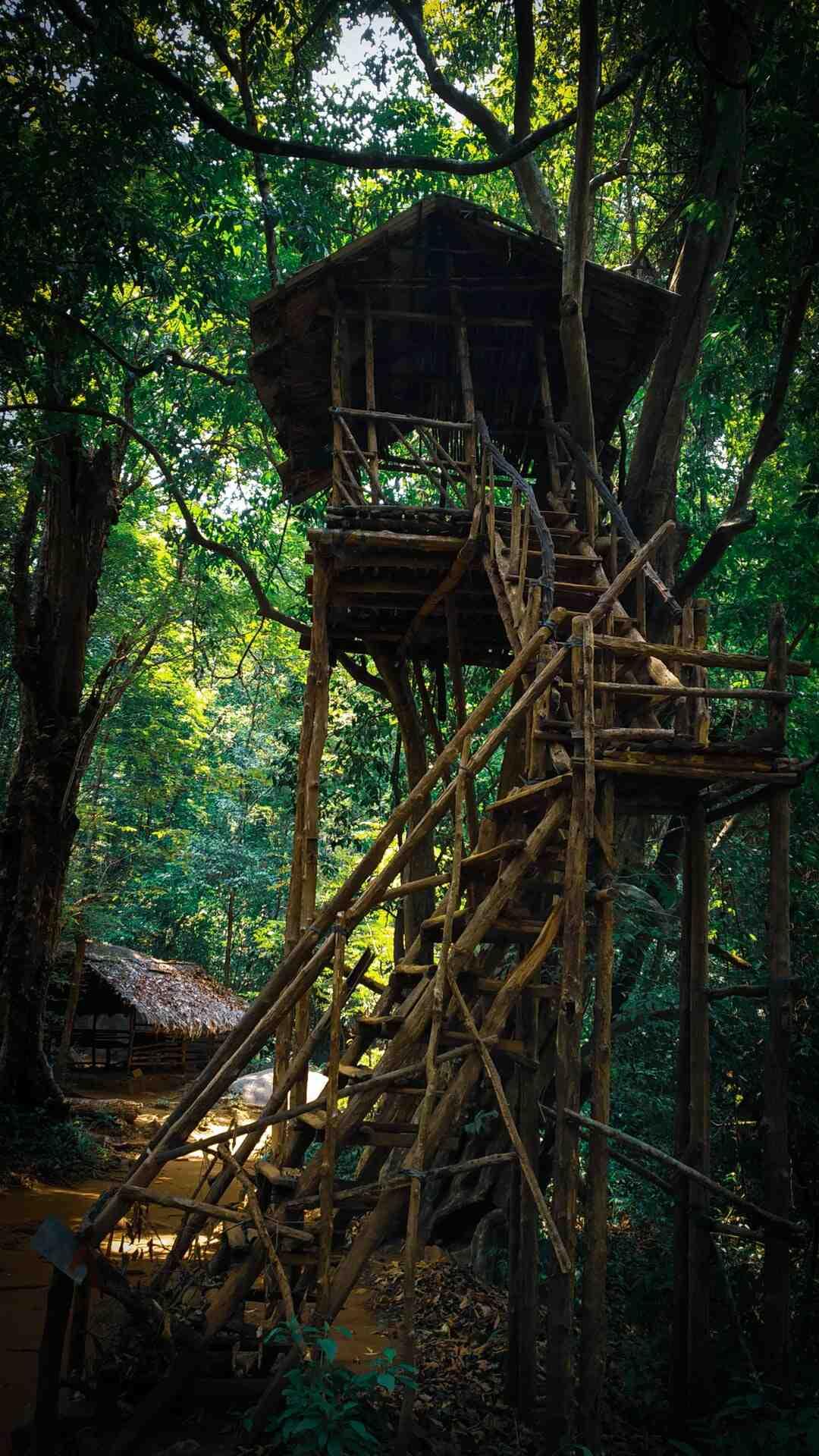 Comment fixer cabane sans blesser l'arbre