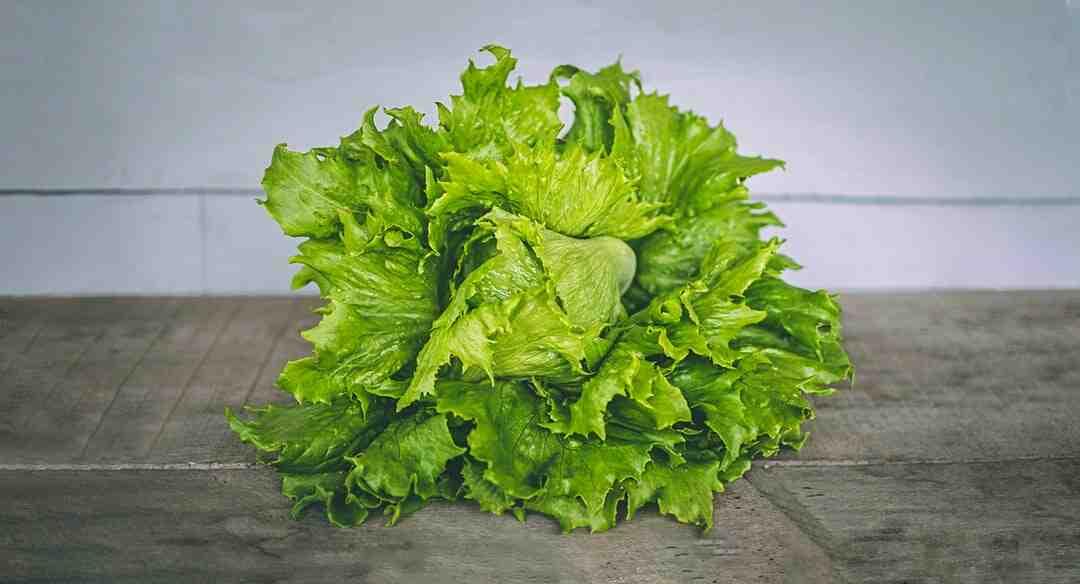 Comment cueillir salade frisée ?